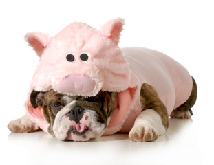 dog dressed up like a pig