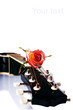 Black guitar and rose.