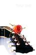 Black guitar and rose.