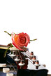 Guitar and red rose.