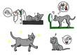 猫の寄生虫の退治