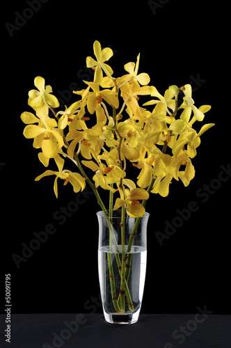 yellow orchid in vase on black