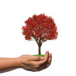 Female Hand holding a big red tree