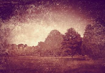 textured woods