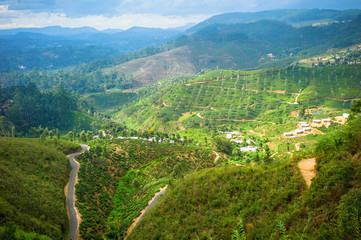 Tea plantation landscape in Hill country, Sri Lanka