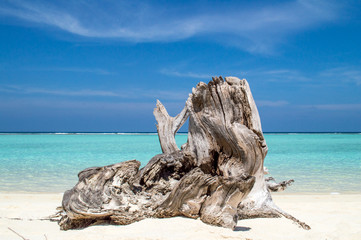 Tree Trunk on Tropical Beach