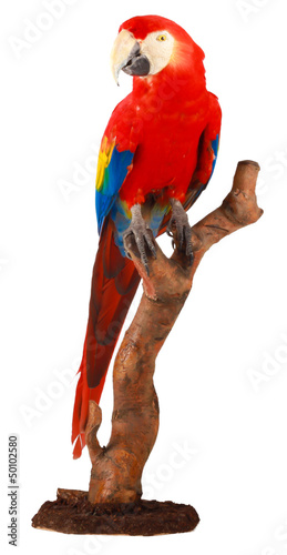 colorful parrot