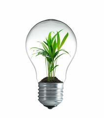 Pflanze wächst in einer Glühbirne