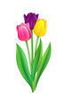 Bouquet of tulips - eps10 vector illustration