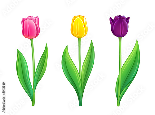 Tulips - eps10 vector illustration
