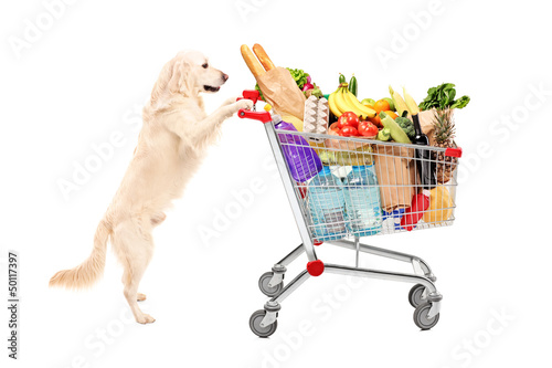Funny retriever dog pushing a shopping cart full of food product