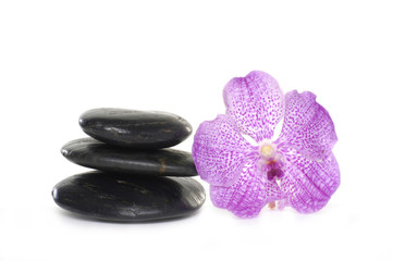 Close up black pebbles with beauty orchid