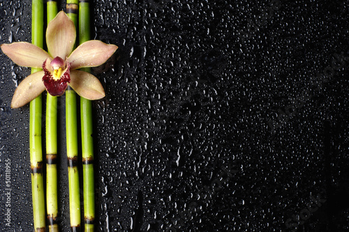 Macro of orchid and bamboo grove on wet black background