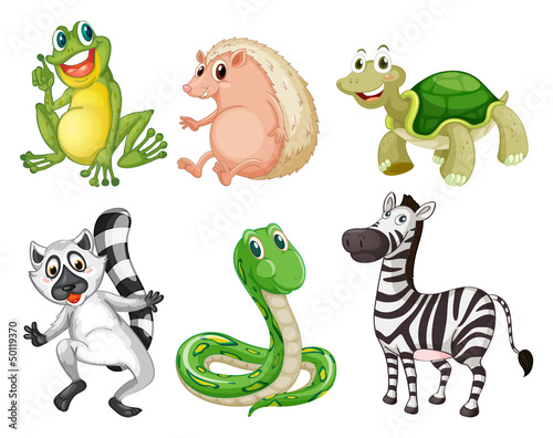 Different species of animals