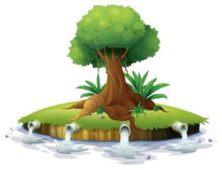 A big tree in an island