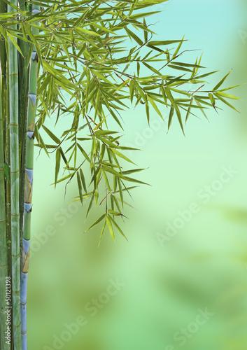 Fototapeten,bambus,baum,pflanze,wohlbefinden
