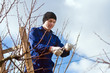 Young man pruning apricot branches using ladder