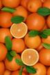 Hintergrund aus Orangen mit Orangenblättern