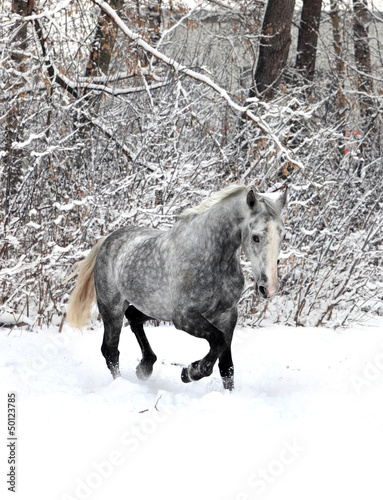 Skipping horse on a winter wood background