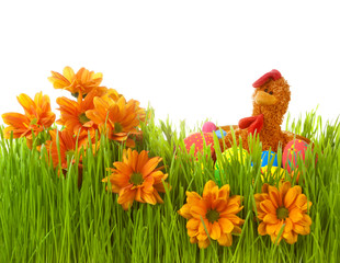 Spring flowers in green grass with easter eggs and chicken