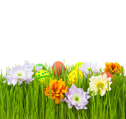 Easter eggs and flowers in green grass