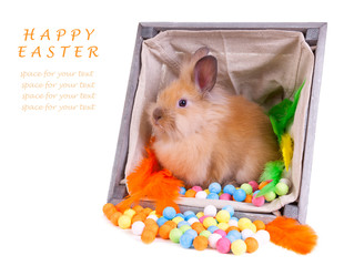 Bunny sitting inside a vintage wooden box with colorful decorati