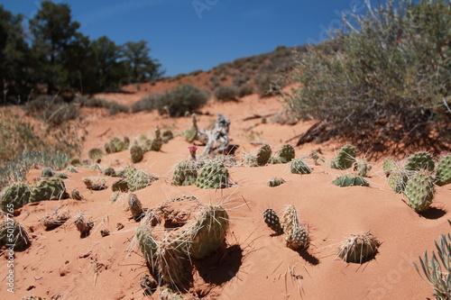 Caldo Torrido - Canyonlands NP
