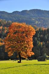 Bayern Herbstlicher Baum