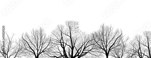 Fototapeta bare trees branches isolated on white