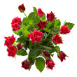 Top view of  red roses bouquet