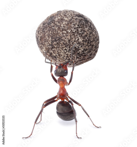 Fotobehang Dragen mighty ant holding heavy stone