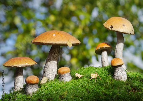 two families of mushrooms meet in the forest, fantasy