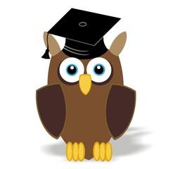 study owl - university - college