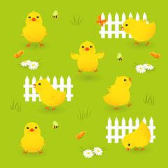 Cute chikens