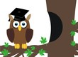 intelligent owl in a tree