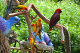 Colourful birds on Sentosa Island, Singapore