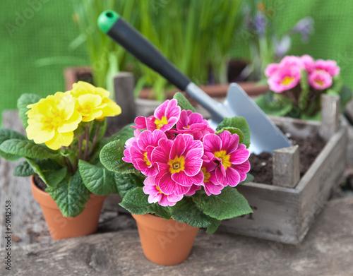 Blumen umtopfen im Garten III - 50142558