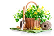 spring flower in basket with garden tool isolated on white