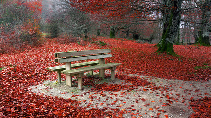 Bench in autumn with red leaves