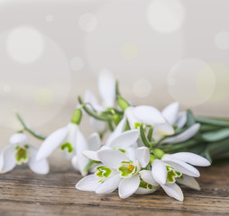 snowdrops close up in detail