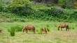 Pferd vid 01