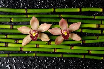 Two orchid with bamboo grove on wet black background