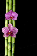 Macro of two orchid and bamboo grove on black background
