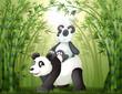 Fototapeten,abbildung,zeichnung,abbild,panda
