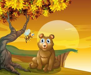 A brown bear sitting near the cliff