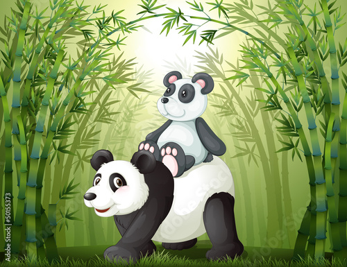 Two pandas inside the bamboo forest