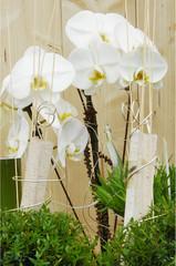 Blumendekorationauf dem Tisch
