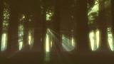 Supernatural Forest Lightrays  poster