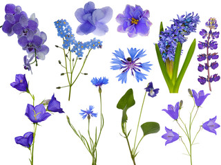 set of eleven blue flowers on white