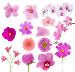 set of fourteen pink color flowers on white